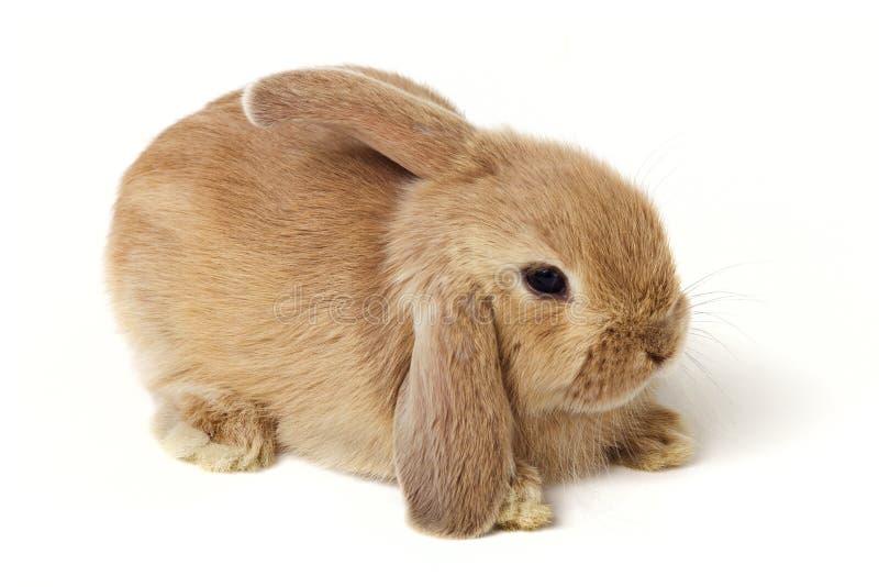 Conejo de Pascua foto de archivo