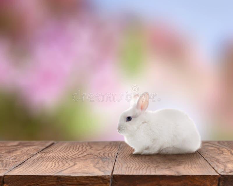 Conejo de Pascua en la tabla imagen de archivo