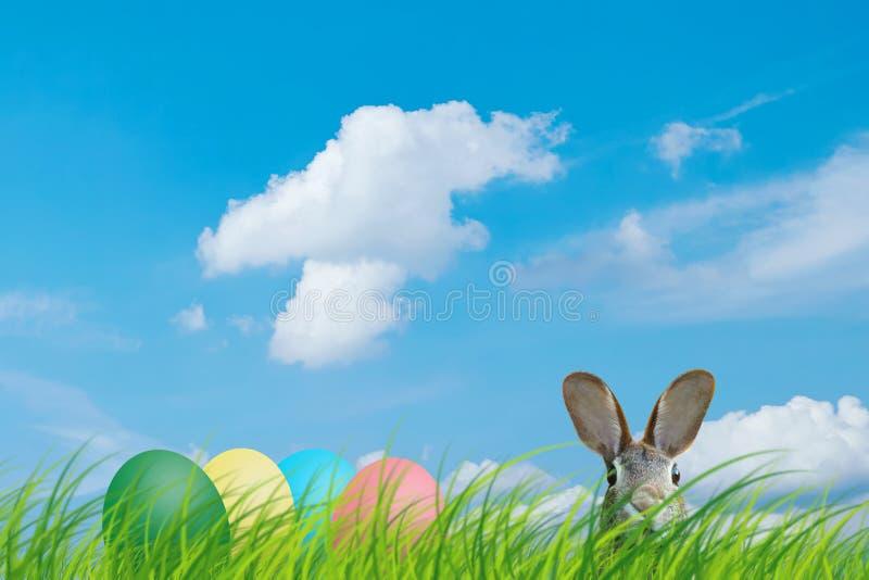 Conejo de pascua y huevos de Pascua ocultados en un prado con el cielo azul foto de archivo
