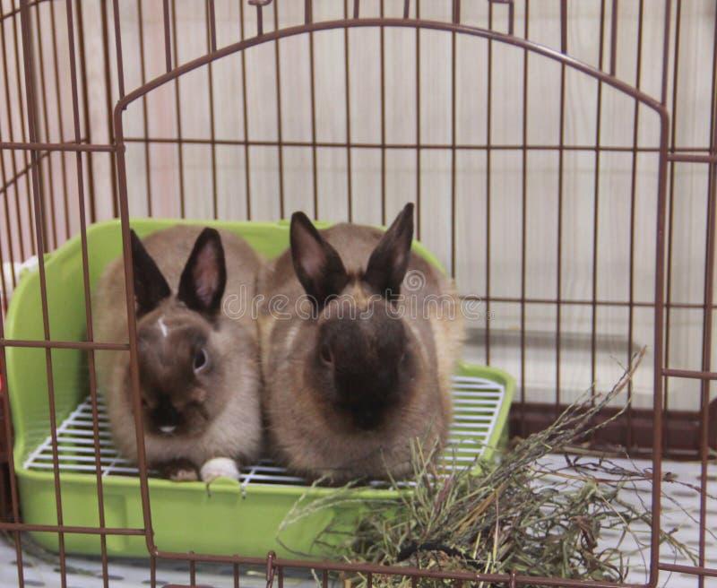 Conejo de Schelo el Jura fotos de archivo libres de regalías