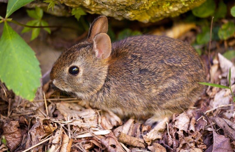 Conejo del bebé en bosque imagen de archivo libre de regalías