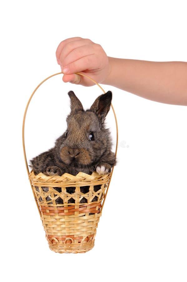 Conejo del bebé y mano grises del niño foto de archivo libre de regalías