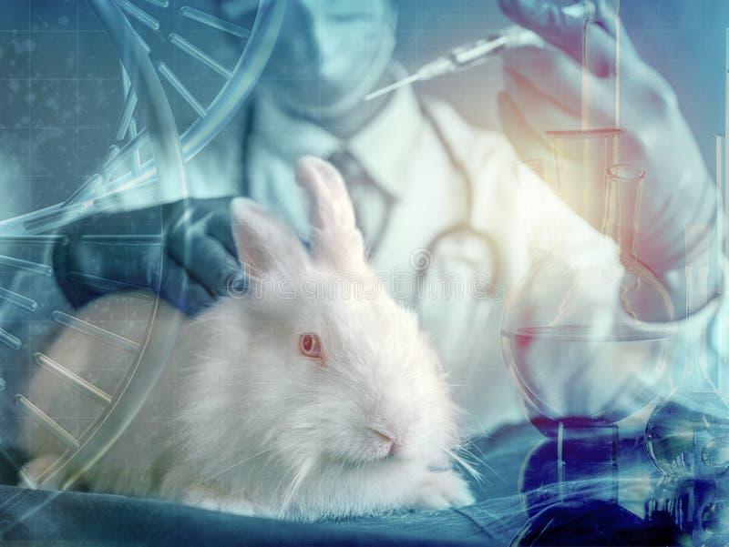 Conejo e investigador blancos con la jeringuilla a mano en el concepto de usar el animal para el experimento imagen de archivo