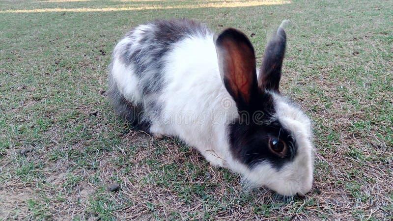 Conejo en casa imagen de archivo