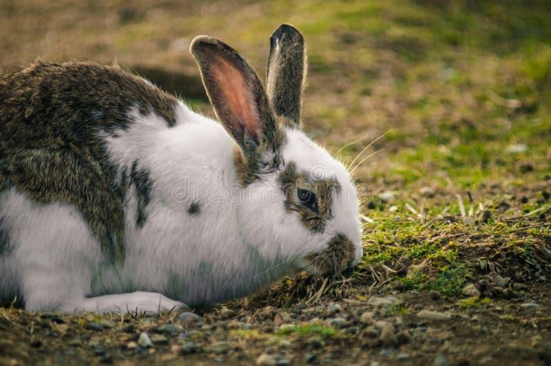 Conejo en el parque foto de archivo
