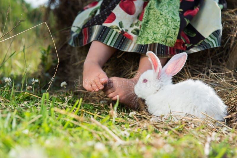 Conejo en el pueblo fotografía de archivo