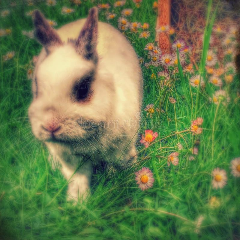 Conejo en herbe de los dans de la hierba/del lapin fotos de archivo