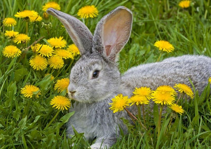 Conejo en hierba imágenes de archivo libres de regalías