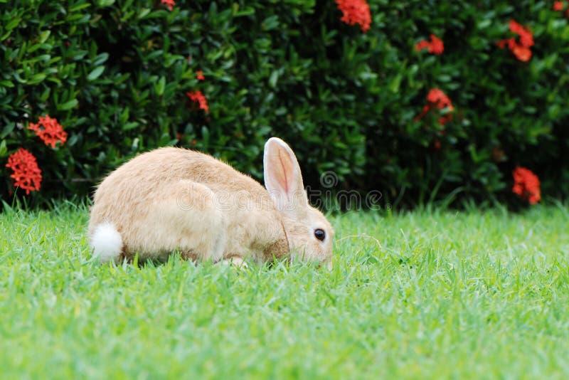Conejo en la hierba imagen de archivo libre de regalías