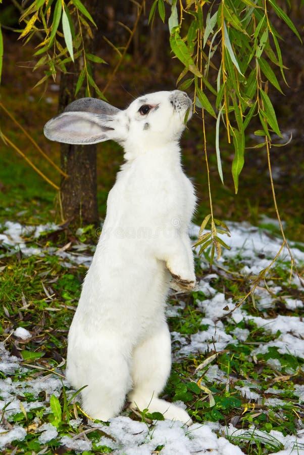 Conejo en otoño fotos de archivo