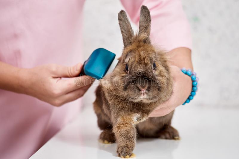 Conejo en salón de la preparación foto de archivo libre de regalías
