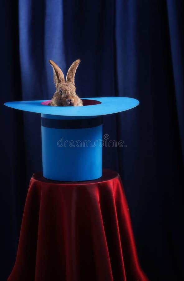 Conejo en sombrero en fondo azul foto de archivo