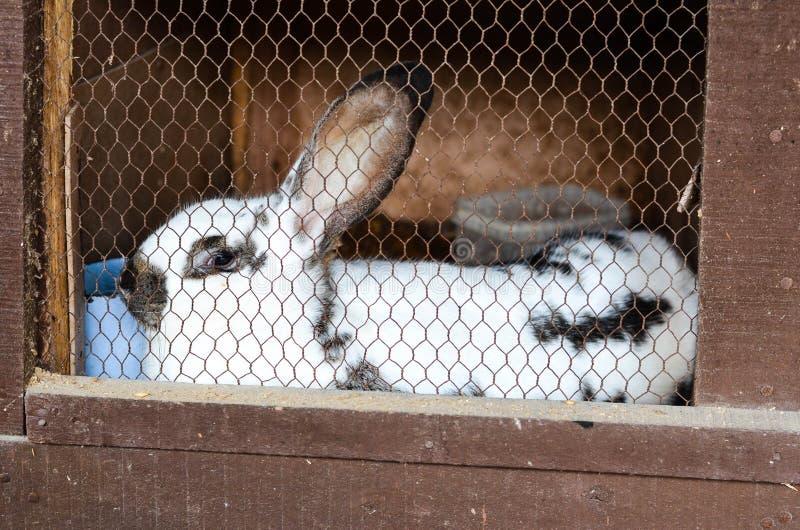 Conejo en una jaula fotos de archivo
