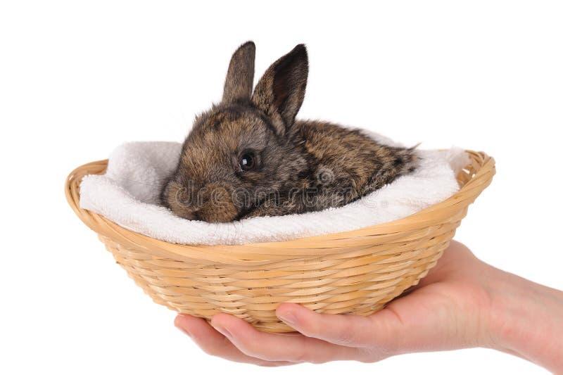 Conejo gris del bebé fotos de archivo libres de regalías