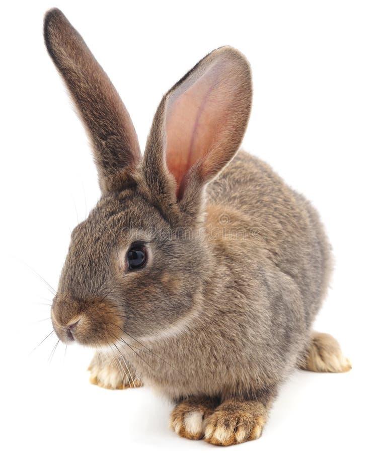 Conejo gris del beb? imagenes de archivo