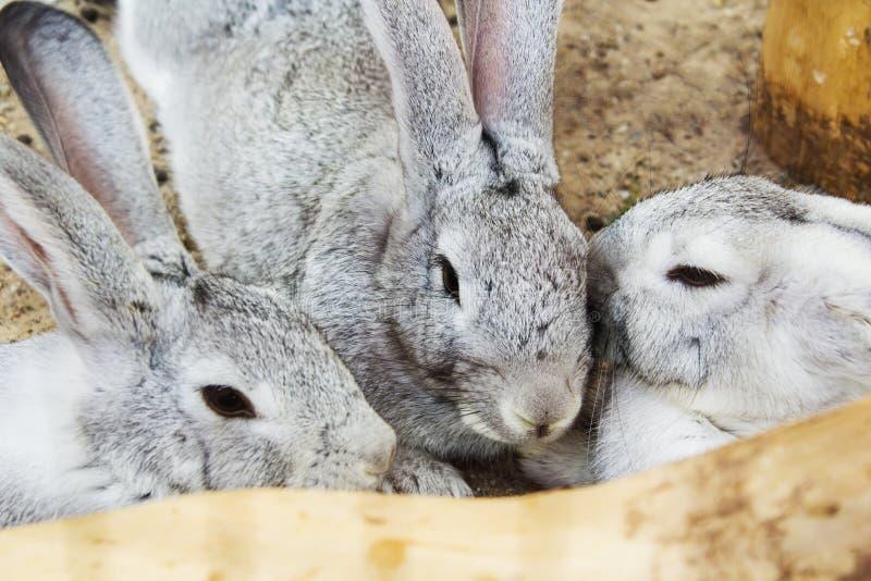 Conejo gris que se sienta en una jaula foto de archivo