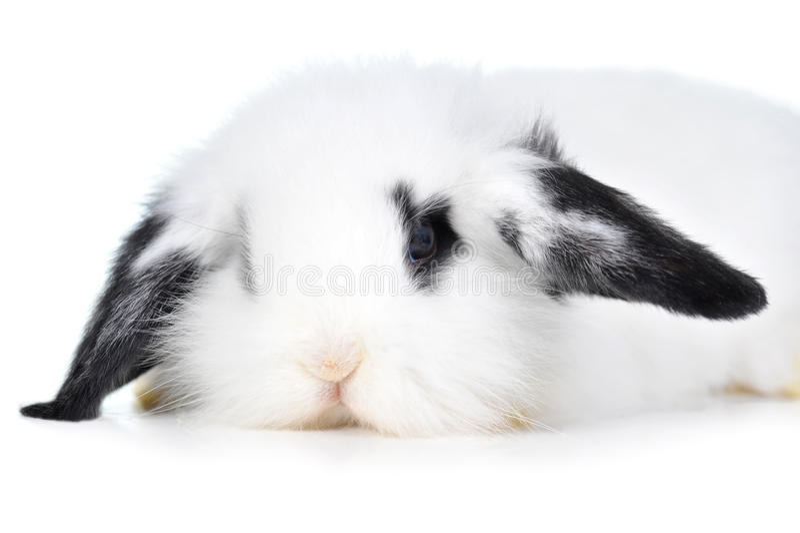 Conejo hermoso fotos de archivo