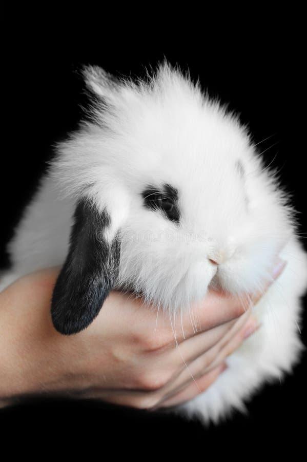 Conejo hermoso fotografía de archivo