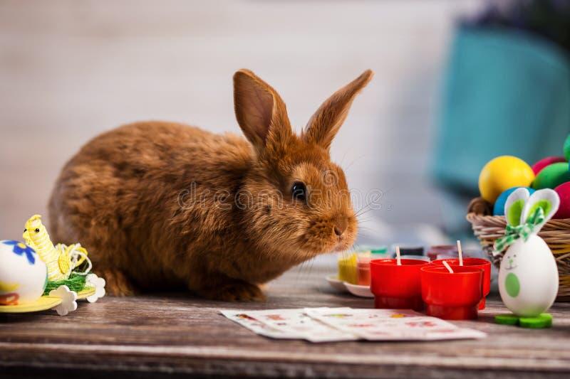 Conejo pelirrojo hermoso que se sienta en un tablero de madera en un azul foto de archivo