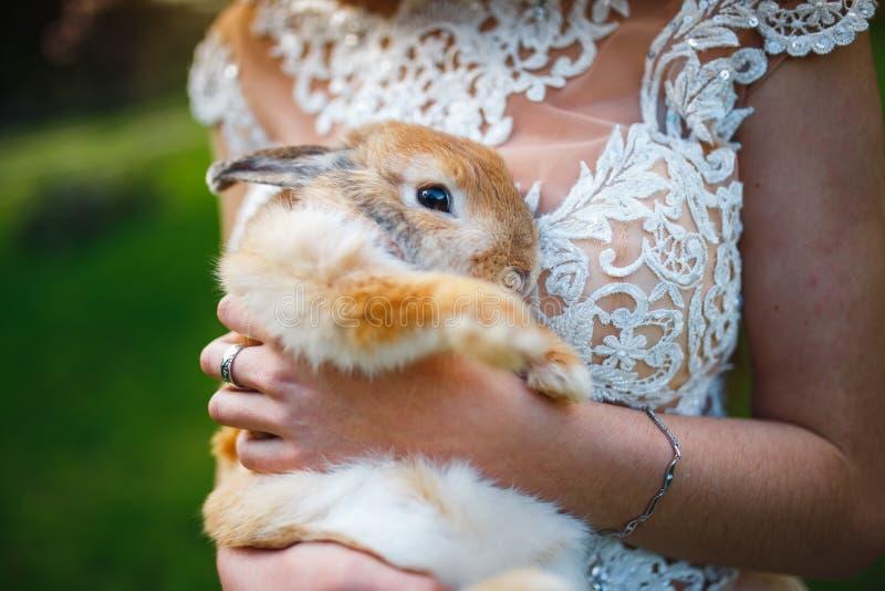 Conejo peludo en las manos de una muchacha en un vestido blanco imagen de archivo