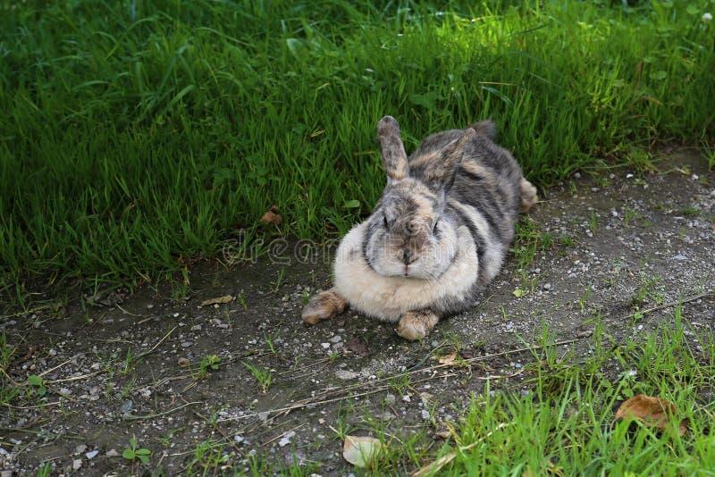 Conejo por el césped verde fotos de archivo