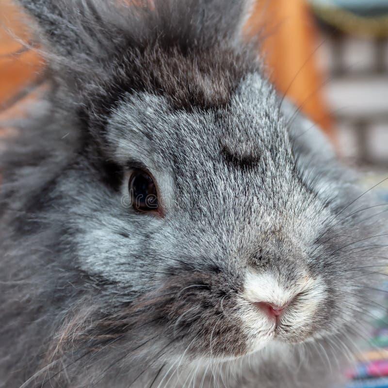 Conejo principal del león dulce foto de archivo libre de regalías