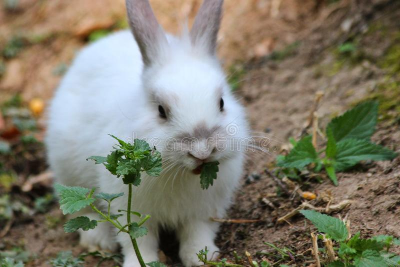 Conejo que come en wildpark en Bad Mergentheim fotos de archivo libres de regalías