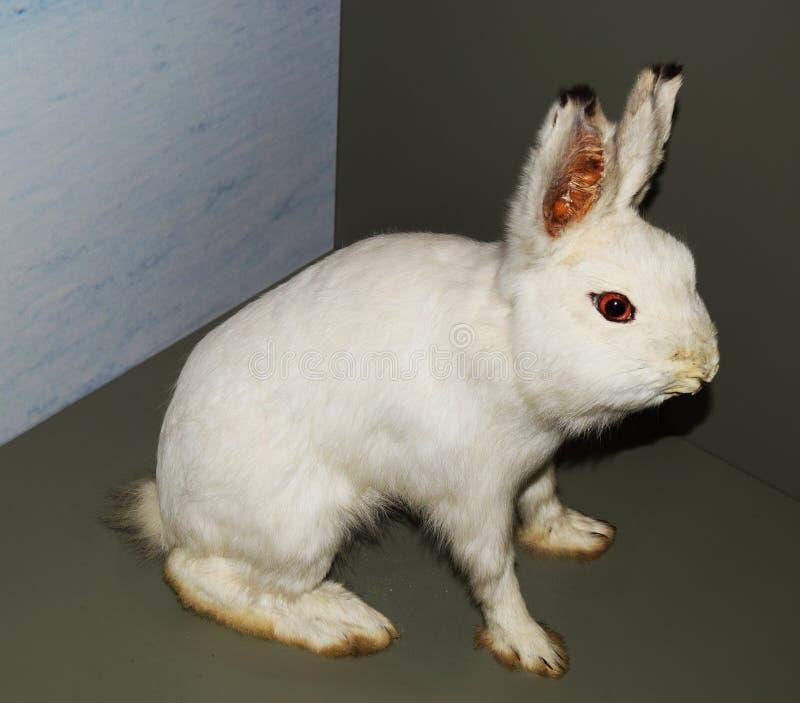 Conejo relleno fotografía de archivo libre de regalías