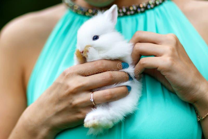 Conejo sorprendido fotografía de archivo libre de regalías