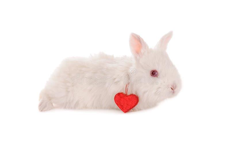 Conejo y corazón blancos del bebé foto de archivo