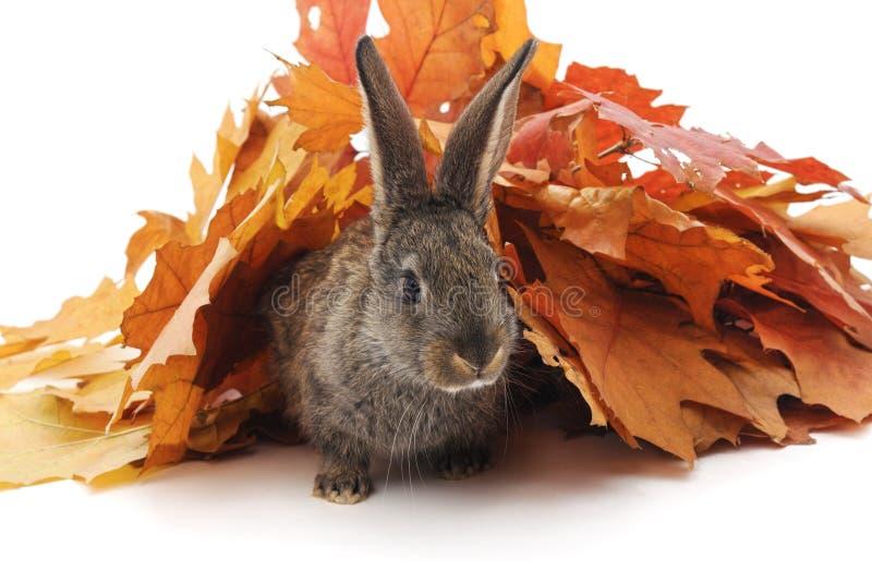 Conejo y hojas de otoño imagen de archivo