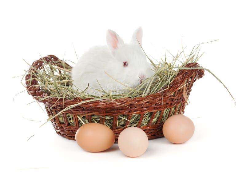 Conejo blanco en una cesta y huevos fotografía de archivo