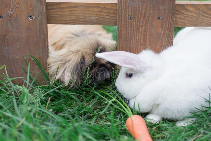 Conejo y un perro en la hierba foto de archivo