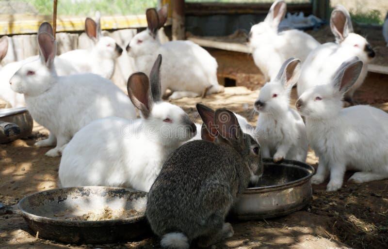 conejos imagen de archivo libre de regalías