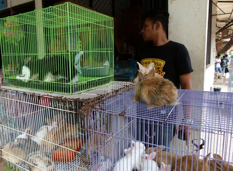 Download Conejos imagen editorial. Imagen de solo, ciudad, central - 64200255