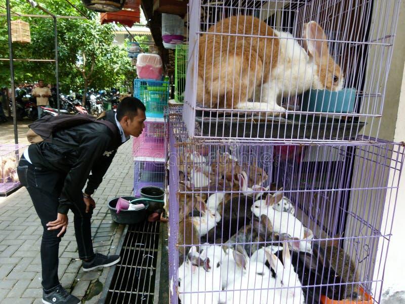 Download Conejos imagen editorial. Imagen de ciudad, mercado, java - 64200280