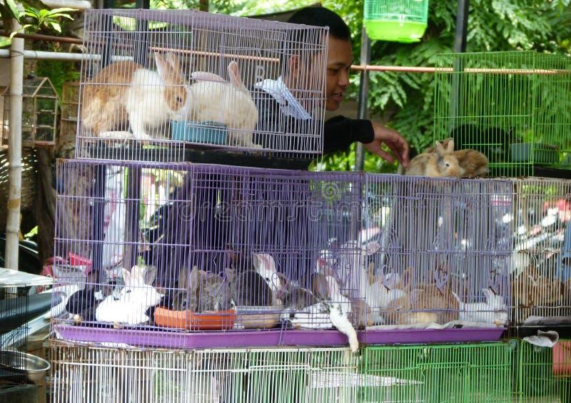 Download Conejos foto editorial. Imagen de mercado, central, java - 64200296