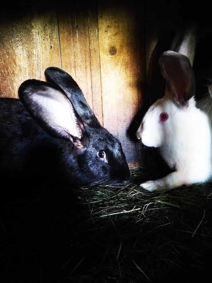 conejos fotos de archivo