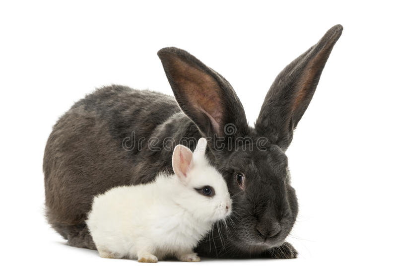 Conejos adentro foto de archivo