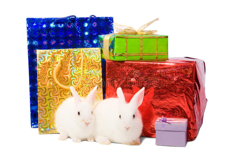 Conejos blancos con los regalos foto de archivo
