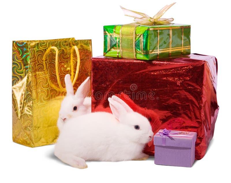 Conejos blancos con los regalos. fotografía de archivo libre de regalías