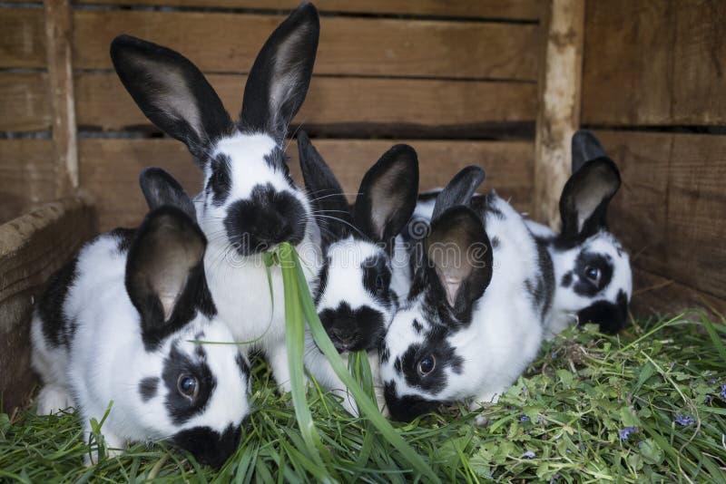 Conejos blancos y negros lindos del grupo con los puntos imágenes de archivo libres de regalías