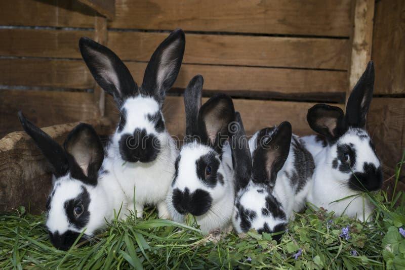 Conejos blancos y negros lindos del grupo con los puntos imagen de archivo