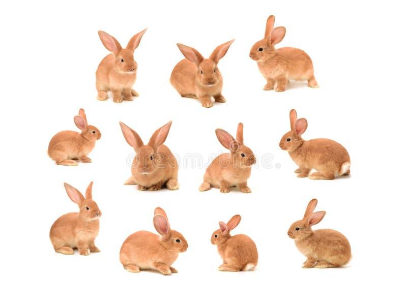 Conejos de conejito imagenes de archivo