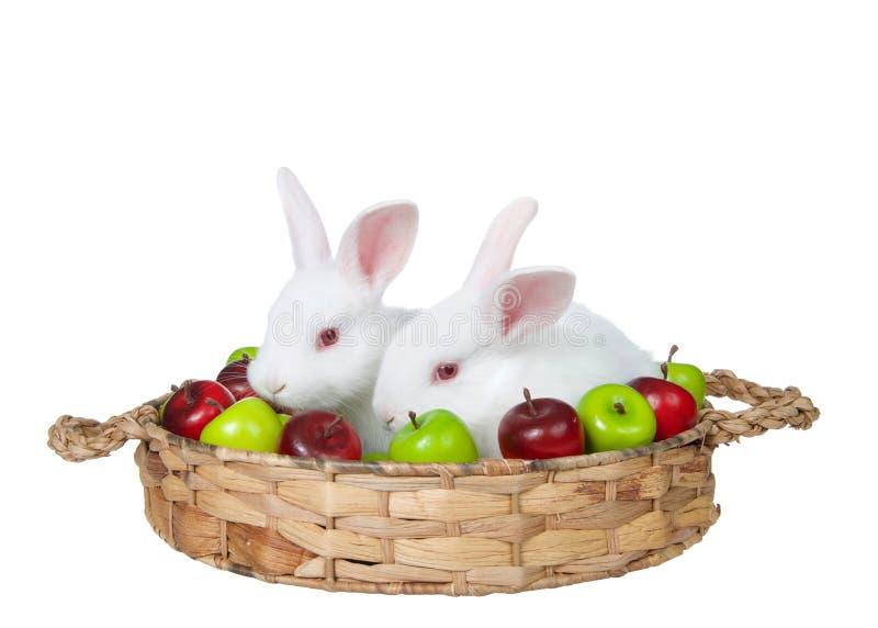 Conejos de conejito blancos del bebé en una cesta de la manzana aislada fotos de archivo