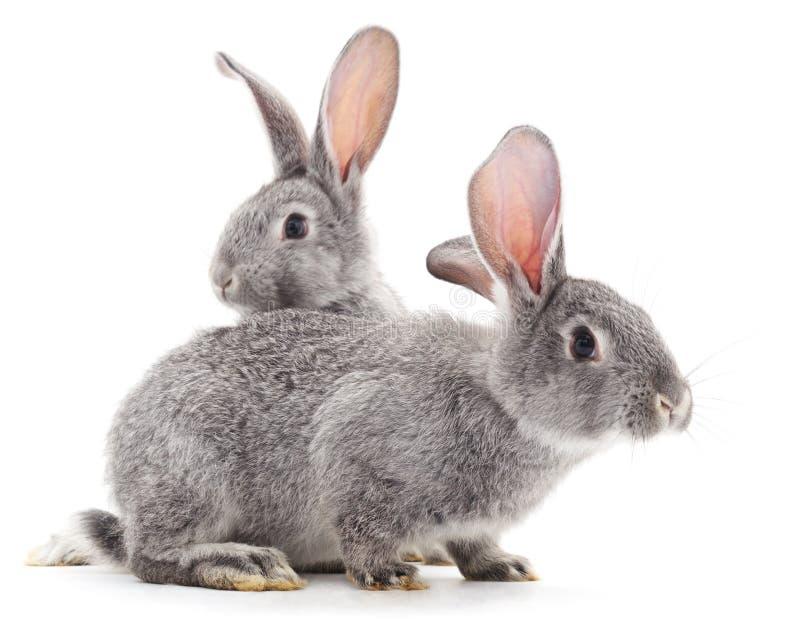 Conejos del bebé imagen de archivo libre de regalías