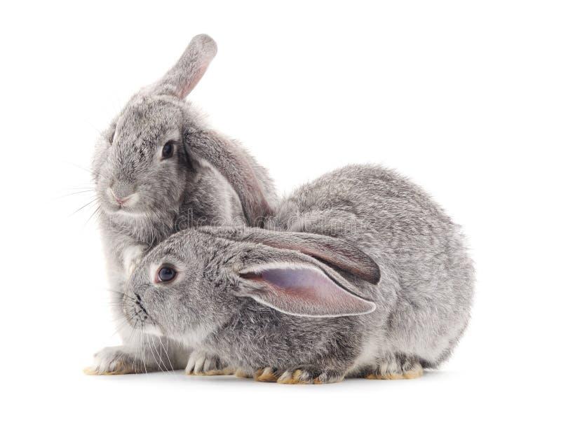Conejos del bebé fotos de archivo