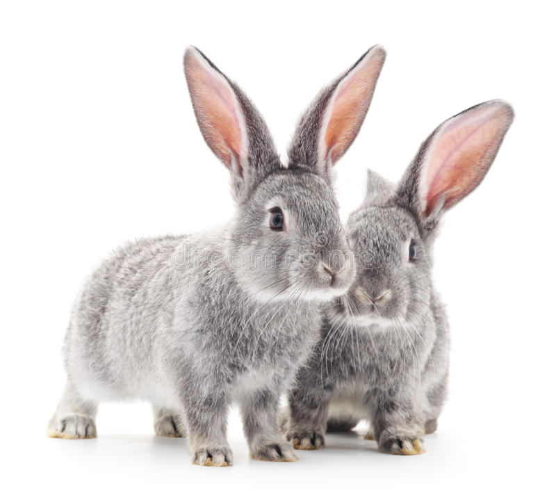 Conejos del bebé imágenes de archivo libres de regalías