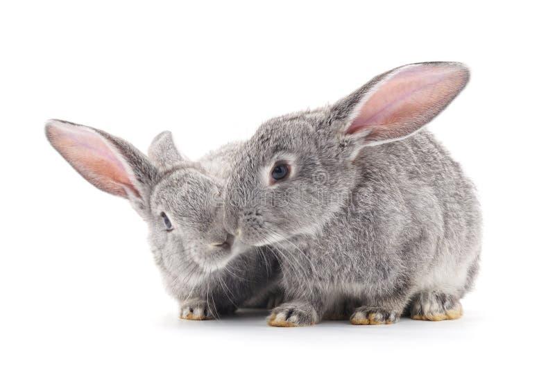 Conejos del bebé foto de archivo