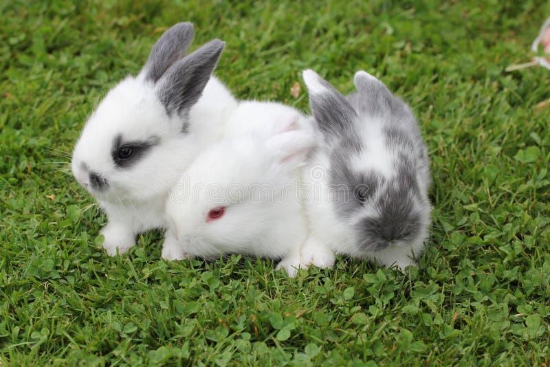 Conejos del bebé en hierba foto de archivo